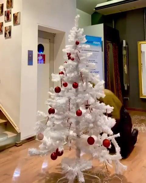 Habt-ihr-euren-Weihnachtsbaum-schon-geschmueckt-Zeigt-her-eure-Bilder