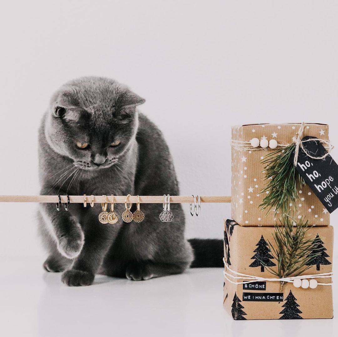 Zeigt-mal-her-eure-KatzenKater-Unser-neuer-Lieblingsaccount-@mynameisjo